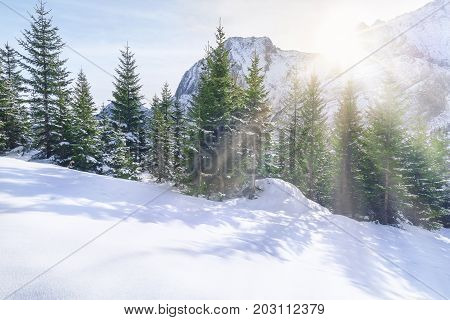 Winter scenery with the snow-capped peak of the Alps mountains and the fir forest enlightened by the rays of the December sun in Ehrwald Austria.
