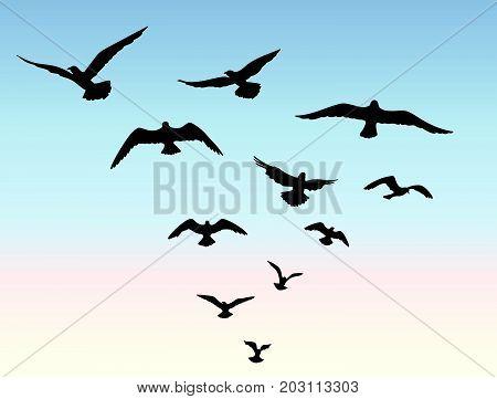 Bird flying silhouette over blue sky background. Animal wildlife skyline