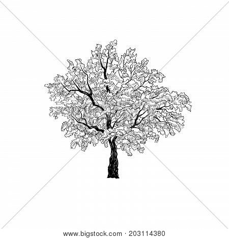 Tree with leaves isolated. Nature sketch sign