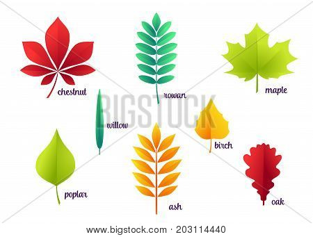 Vector illustration of autumn leaves oak, rowan, maple, birch, willow, chestnut, ash, poplar isolated on white background in flat style