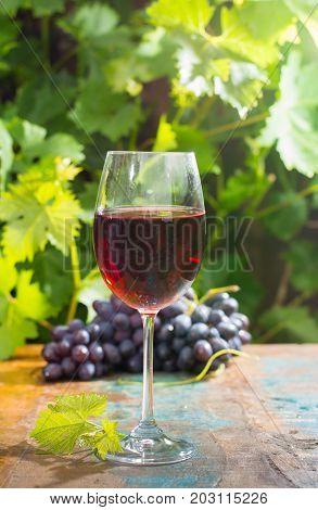 Wine Glass Wirh Red Wine, Outdoor Terrace, Wine Tasting In Sunny Day, Green Vineyard Garden Backgrou