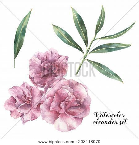 Watercolor floral set. Hand painted oleander flowers with leaves and branch isolated on white background. Botanical illustration for design, print, fabric