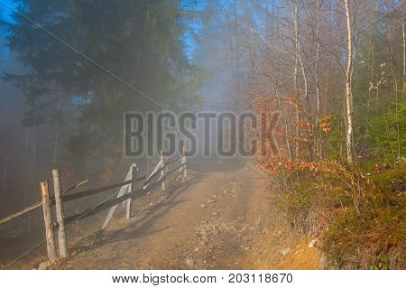 Countryside Road Trough Misty Forest