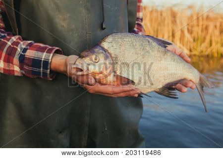 a fisherman standing in the water holding in his hand caught on spinning bream.