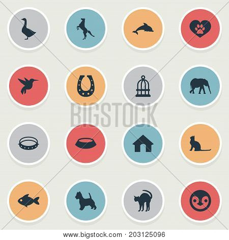 Elements Belt, Fish, Tomcat And Other Synonyms Hummingbird, Tomcat And Fish.  Vector Illustration Set Of Simple Animals Icons.