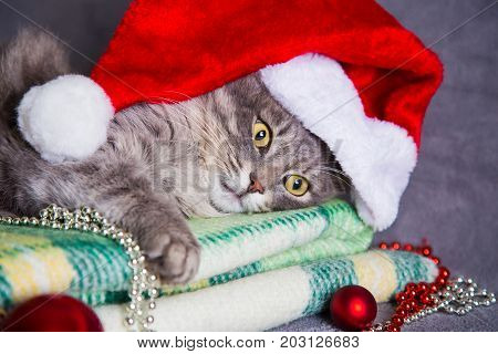 Cute Furry Home Cat In Santa Hat With Christmas Balls And Beads On Green Plaid