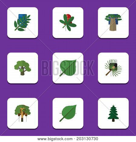 Flat Icon Ecology Set Of Maple, Tree, Park And Other Vector Objects