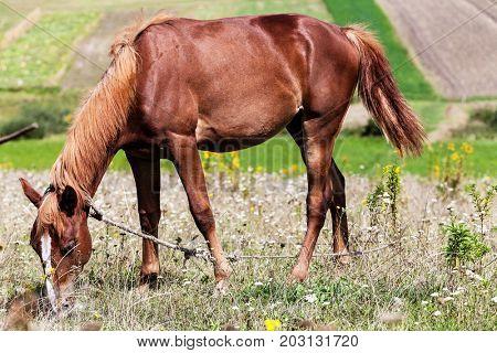 horse on grazing
