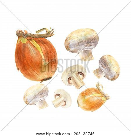 Botanical watercolor illustration of whole and cut mushroom champignon and onion on white background. Could be used as decoration for web design, polygraphy or textile