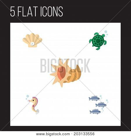 Flat Icon Marine Set Of Conch, Tortoise, Seashell And Other Vector Objects