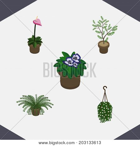 Isometric Flower Set Of Flowerpot, Grower, Blossom And Other Vector Objects