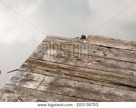 Edge Of Pontoon On Lake Rotted Old Wood Grunge
