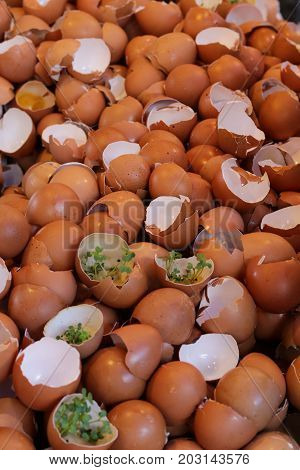 Eggshell cracked pattern background with seeding plant in shell.