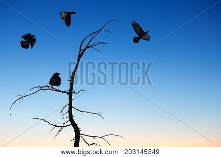 Halloween day with ravens flying over blue sky