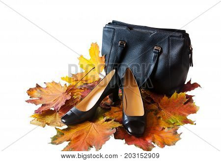 Leather shoes and bag with autumn leaves isolated on white. Shoes and bags collection sales. Autumn sales
