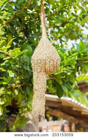 nest of Baya Weaver on blur tree background