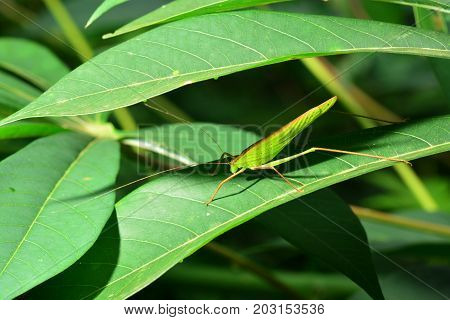 Grasshopper on leaf, note select focus with shallow depth of field