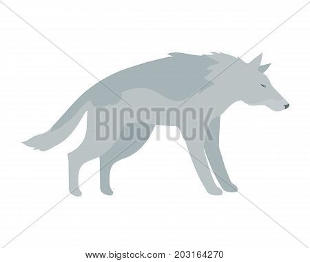 Wolf flat style vector. Wild dangerous predatory animal. Middle latitudes fauna species. For nature concepts, children's books illustrating, printing materials. Isolated on white background