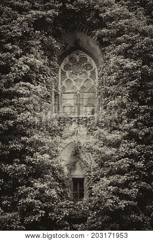 Summer day. Poland the town of Malbrock a Teutonic castle of red brick built from 1309 to 1456. In the frame is a wall made of red brick an old window all covered with green plants. Vertical shot. Black and white image