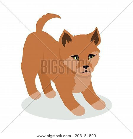 Dingo cartoon character. Wild dingo dog flat vector isolated on white background. Australian or Asian fauna. Cute puppy icon. Animal illustration for zoo ad, nature concept, children book illustrating