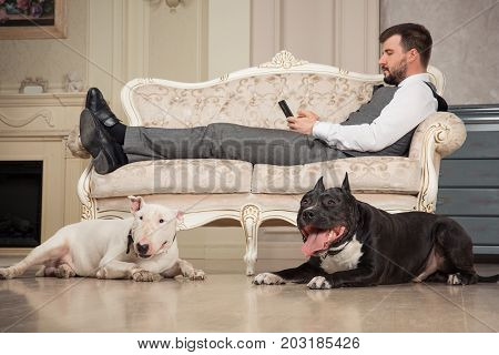 Man with mobile phone liesing on the sofa. Dogs: black pit bull or stafforshire terrier white bull terrier seatting in the legs of man in retro studio