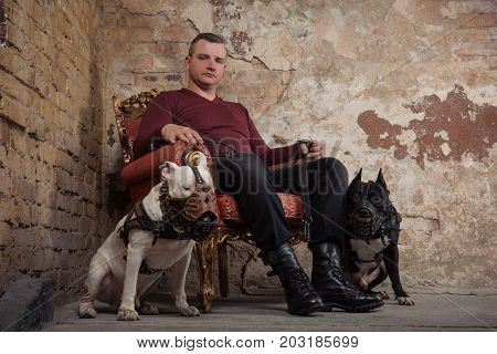 Adult man satting in a vintage armchair on the background of a peeled wall. On each side the man sitting two dogs. black pit bull or stafforshire terrier white bull terrier seatting in muzzles. Studio shoot.