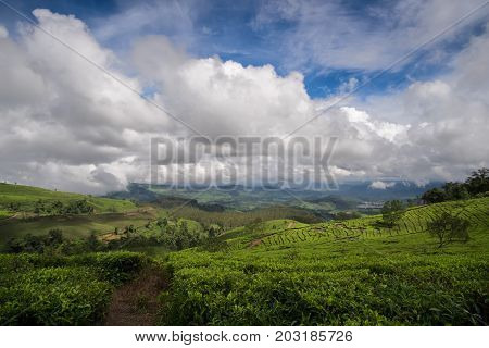 Hills Covered With Tea Plantations, Bandung, West Java, Indonesia