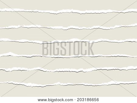 torn paper vector with various horizontal ripped shapes
