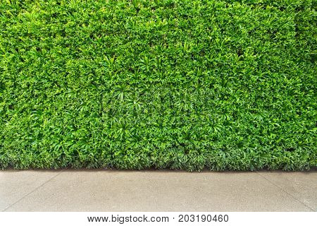 Beautiful Green leaf wall and background with floor