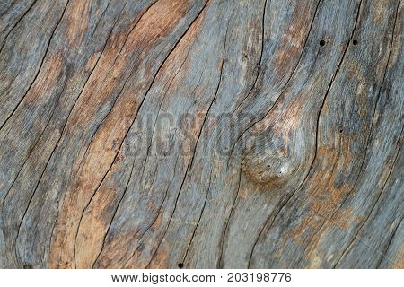 bark texture or bark texture image use for bark background or tree bark background