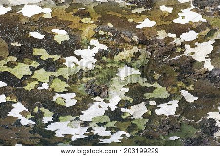 Bark tree - abstract background