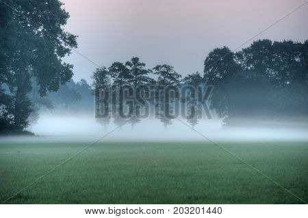 Fog on a morning in august just before sunrisen in the Netherlands