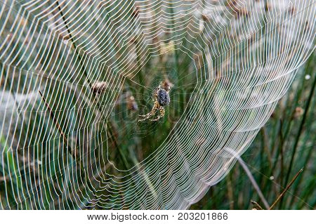 Spider web between grass on a misty morning in the Netherlands