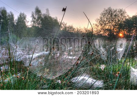 Spider web between grass on a misty morning in the Netherlands. HDR shot.