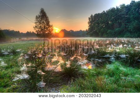 Spider webs between grass on a misty morning in the Netherlands. HDR shot