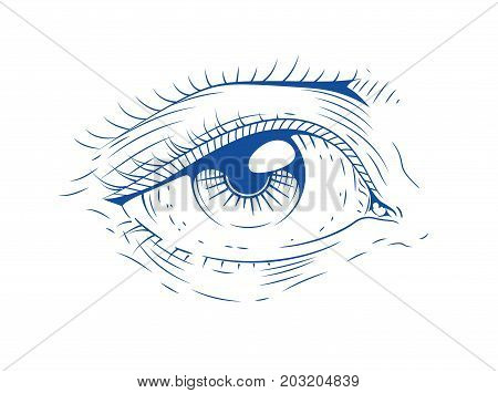 Eye. Vintage engraving. Isolated white background. Vector illustration.