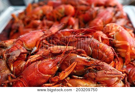 Heap Of Fresh Cooked Red Crawfish Close Up