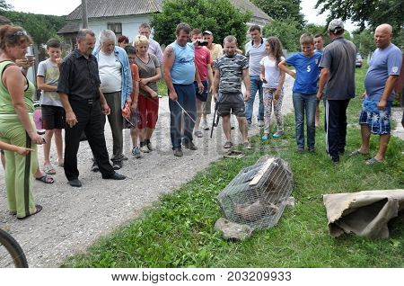 Shmankivchyky - Ukraine - 29 June 2016. The villagers caught an unknown animal which is popularly called Chupacabra. This beast killed many people in rabbits and poultry