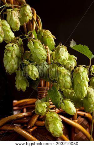 fresh aromatic hops background, beer, bitter, bitterness,