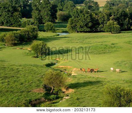Horses In Pasture Aerial