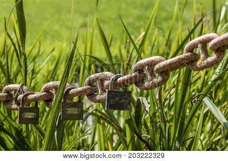 a big fat in front of the rusted chain