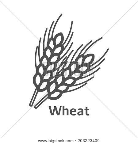 Wheat Ear Line Icon, Outline Vector Sign, Linear Style Pictogram Isolated On White. Symbol, Logo Ill