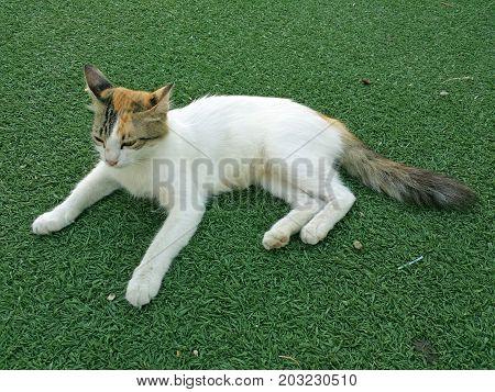 Little pussycat sits on the garden grass