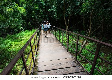 Pathway into rain forest.Wooden path walkway through the forest