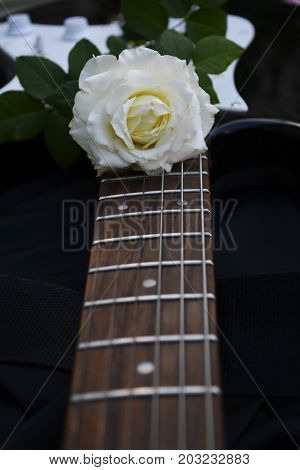 white rose lying on the strings of the guitar brings a romantic mood to create beautiful melodies