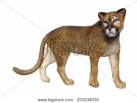 3D rendering of a big cat puma isolated on white background