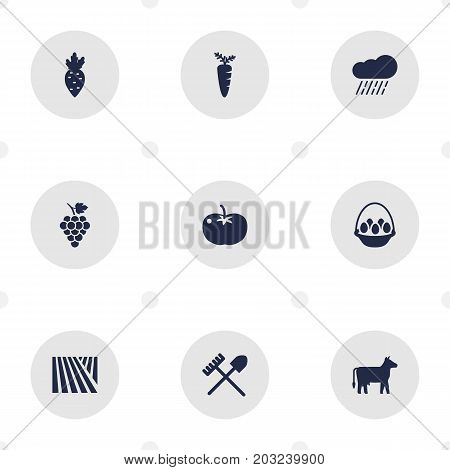 Collection Of Container, Veggie, Radish And Other Elements.  Set Of 9 Agricultural Icons Set.