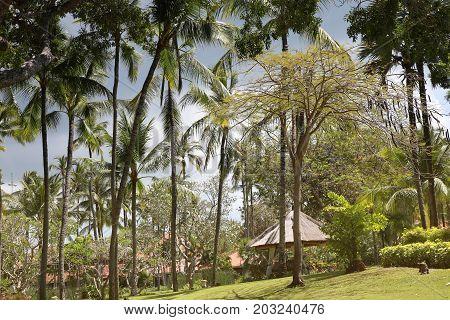 Rainy season, rainy clouds over the beautiful tropical garden