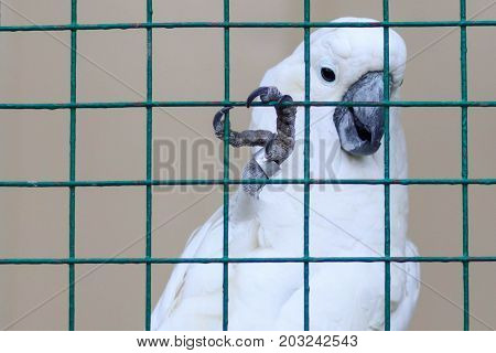White parrot in cage. prison for animals