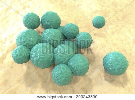 Staphylococcus epidermidis, 3D illustration. Gram-positive spherical bacteria which inhabit skin and are part of normal microflora